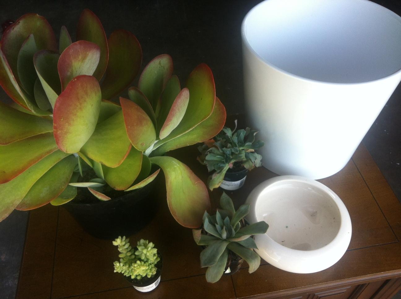 The Succulent Trend